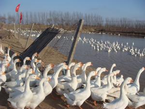 http://www.yuhuagroup.com/upload/yuhuajituan/20121213/13553625270462844ce98.jpg?from=90